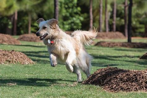 Dog enjoying dog park