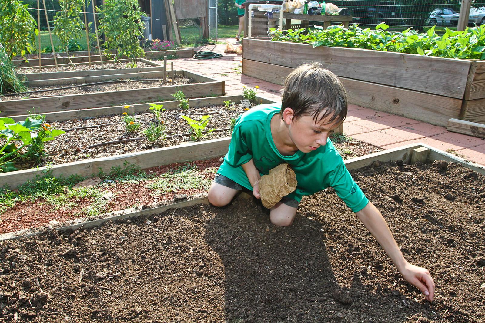 Volunteer planting seeds