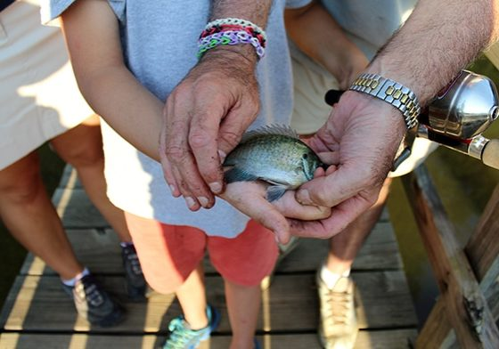 Child holding fish